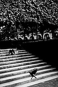April 2015. Paris. A couple of black birds up the stairs on Les Tulleries garden