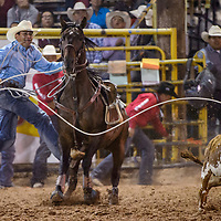 Tie down roper Kee Etsitty jumps from the saddle during the first round of the Navajo Nation Fair rodeo in Window Rock Thursday.
