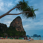 Palm tree hanging over Railay beach in Krabi, Thailand