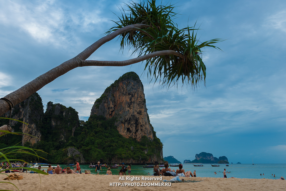 Palm tree hanging over Railay beach in Krabi, Thailand
