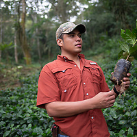 Kevin Alexis Flores, who provides technical support as a specialist agronomist for Molinos, in a cofee nursery at La Laguna, Santa Barbara, Honduras.