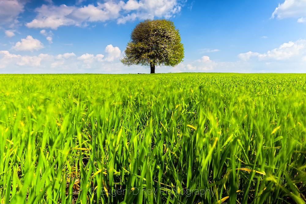 Sunny spring landscape with a tree