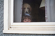 Dog and young flower girl looking out the window at Toby and Owen Duff's wedding