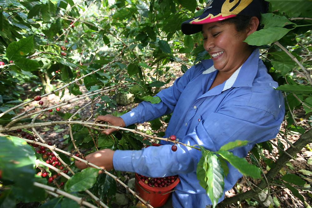 Norma Estrella Monroy, picking coffee on the farm of a COPROCAEL coop member. COPROCAEL, Cooperativa De Productores De Café La Encarnación Ltda, is a Fairtrade-certified coffee producer in Encarnación, Ocotepeque, Honduras, close to the borders of Guatemala and El Salvador.