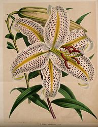 Belgique horticole.<br /> Liége.<br /> https://biodiversitylibrary.org/page/41956116