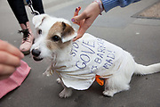 A dog dressed up with the words: Stops Gove. He is barking mad.Thousands of teachers took to the streets of London in a march of prostest against Government cuts and proposed longer hours and later pensions as part of a nation wide strike. Michael Gove, the Secretary of State for Education is the prime taget of the teacher's venon and anger.