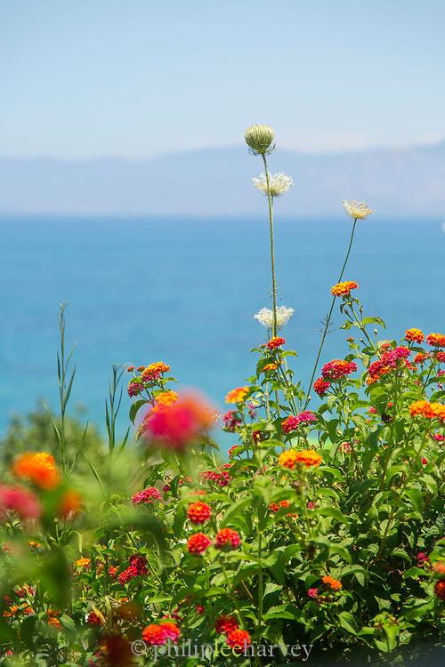 Close-up of colorful flowers with sea in background, Paphos, Cyprus
