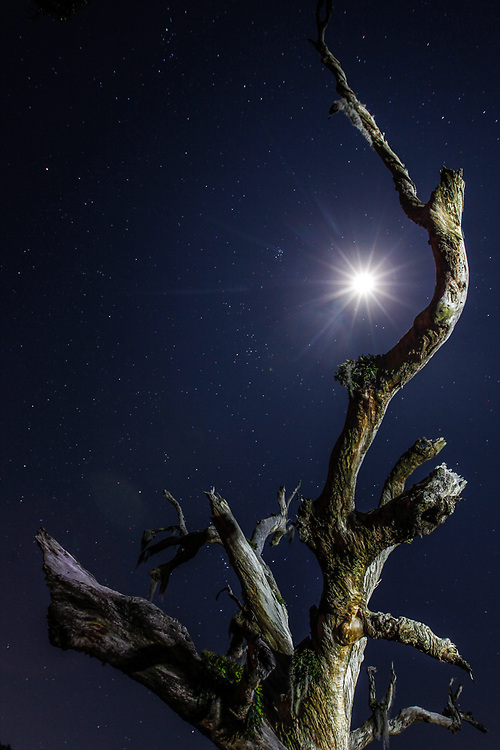 The moon and starts are seen in the sky over Fontainebleau State Park in Mandeville, Louisiana.