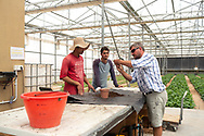 Blaise Jowett (right), head grower, shows two farm workers the best way to plant seeds at The Sahara Forest Project on the outskirts of Aqaba, on Jordan's southern Red Sea coastline. The farm uses desalinated sea water and greenhouses to sustainably farm crops in land that was once aris desert.