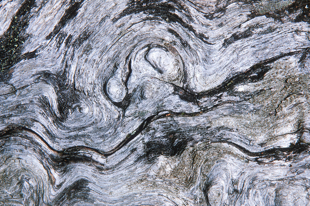 Blowdown Log Detail, Mt. St. Helens National Volcanic Monument, Washington, US