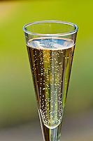 A flute of champagne, Restaurant, Mudbrick Vineyard, Oneroa, Waiheke Island, Hauraki Gulf, near Auckland, New Zealand