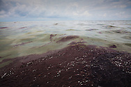BP oil on the surface of Barataria Bay on the 45th day of the spill.