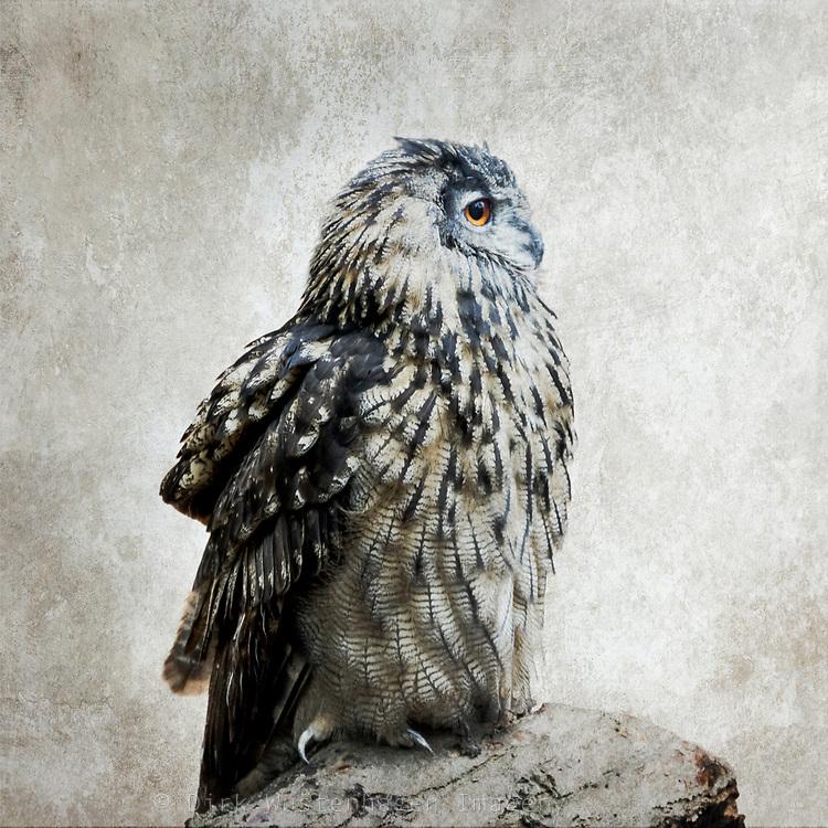 Portrait of an bubo bubo owl