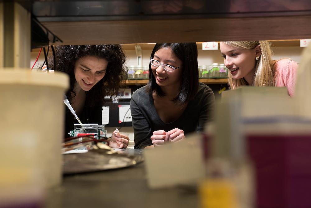 Brandeis University biology professor Avital Rodal leading students in her lab.