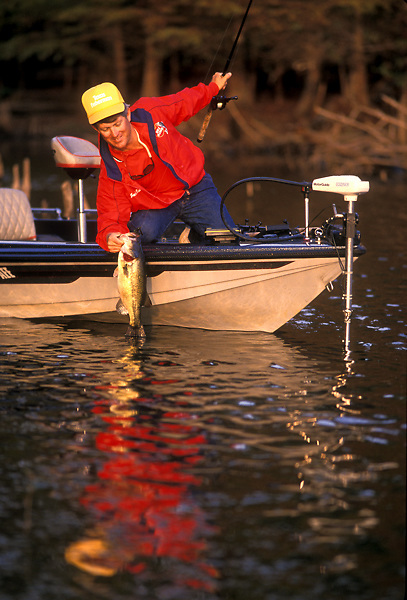 Professional fishing guide pulling a freshly caught largemouth bass (Micropterus salmoides) into the boat.