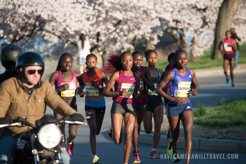 Runners pass by Washington DC's famous cherry blossoms in full bloom during the running of the annual Cherry Blossom 10-Miler. Leaders of the women's race of the 2015 Credit Union Cherry Blossom 10 Mile Run pass the 4-mile mark of the race. The Cherry Blossom 10-Miler (formally the Credit Union Cherry Blossom 10 Mile Run) is held each spring during the National Cherry Blossom Festival and attracts tends of thousands of runners.