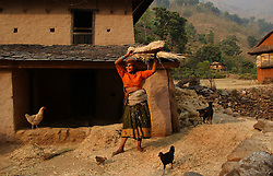 """RUKUM DISTRICT, NEPAL, APRIL 17, 2004: A  Nepalese villager punds wheat in Rukum District April 17, 2004. Ill-equipped security forces in politically unstable Nepal are unable to control  Maoist rebels, who continue to abduct thousands of villagers for forcible indoctrination and military training.  The Maoists mainly target students, teachers and youths. The victims are usually released after a few days of indoctrination, unless they actively resist the """"training attempts,"""" in which case the rebels torture or sometimes kill them. Maoist insurgents have capture most of the Western part of Nepal in their attempt to make it a Communist State. Analysts and diplomats estimate there about 15,000-20,000 hard-core Maoist fighters, including many women, backed by 50,000 """"militia"""".  In their remote strongholds, they collect taxes and have set up civil administrations, and people's courts. They also raise money by taxing villagers and foreign trekkers.  They are tough in Nepal's rugged terrain, full of thick forests and deep ravines and the 150,000 government soldiers are not enough to combat this growing movement that models itself after the Shining Path of Peru. (Ami Vitale/Getty Images)"""
