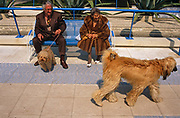 An elderly and eccentric couple sit on a park bench in the French Mediterranean resort of Juan-les-Pins near Antibes, with their own pet dog on a lead while watching an Afghan Hound which struts past in a showy manner. The shaggy Afghan's coat resembles the colour of the lady's own pet and the texture of her own coat. It is around mid-day and looks warm but the couple are dressed for deepest winter, oblivious to the warm sunshine. The hairy Afghan strides ceremoniously and with great style, while the small pooch on the peoples' lead looks nervous and uncomfortable. Juan-les-Pins is a town in the commune of Antibes, in the Alpes-Maritimes, in southeastern France, on the French Riviera (Côte d'Azur).