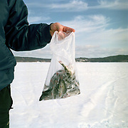 A man holds a bag of small fish he has caught whilst ice fishing on Lake Paijanne, Jyvaskyla, Central Finland. Jyvaskyla is the capital of Central Finland and the largest city in the Finnish Lakeland, an area of more than 188,000 lakes. During the Winter, the city is transformed and the lakes which surround it become a temporary urban park with a specially constructed ice skating and other paths carved out by ski-ers, dog walkers and pedestrians. Ice fishing and ice swimming are also popular sports.
