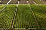 Sugarcane Plantations<br /> GUYANA<br /> South America