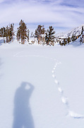 Backcountry skier and animal tracks, John Muir Wilderness, Sierra Nevada Mountains, California  USA