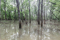 Flooded Buckeye Trail, Great Trinity Forest, Dallas, Texas, USA
