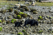 Wildlife photography from Archipelago Wildlife Cruise, British Columbia, Canada
