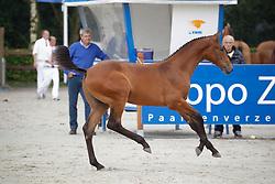 © Hippo Foto - Leanjo de Koster<br /> KWPN Paardendagen 2011 - Ermelo 2011<br /> © Hippo Foto - Leanjo de Koster