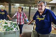 07 AUGUST 2012 - TOLLESON, AZ:   ARNIE WININGER, right, a volunteer at the food bank in Tolleson, AZ, joins the workers in prayer before the doors opened Tuesday. The Tolleson food bank has been operating for more than 20 years. It used to serve mostly the families of migrant farm workers that worked the fields around Tolleson but in the early 2000's many of the farms were sold to real estate developers. Now the food bank serves both farm worker families and people who lost their homes in the real estate crash, that his Phoenix suburbs especially hard. More than 150 families a day are helped by the Tolleson food bank, an increase of more than 50% in the last five years.   PHOTO BY JACK KURTZ