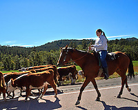 Working Horse on a Cattle Drive. Crossing Highway 24 in Crook County, Wyoming. Image taken with a Nikon D700 and 28 mm f/1.8G lens (ISO 200, 28 mm, f/8, 1/5000 sec).