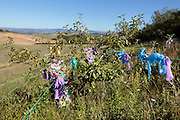 plastic shopping bags on a wash line in a little fruit tree