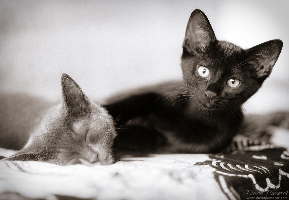 Two brother cats, one black, the other grey.