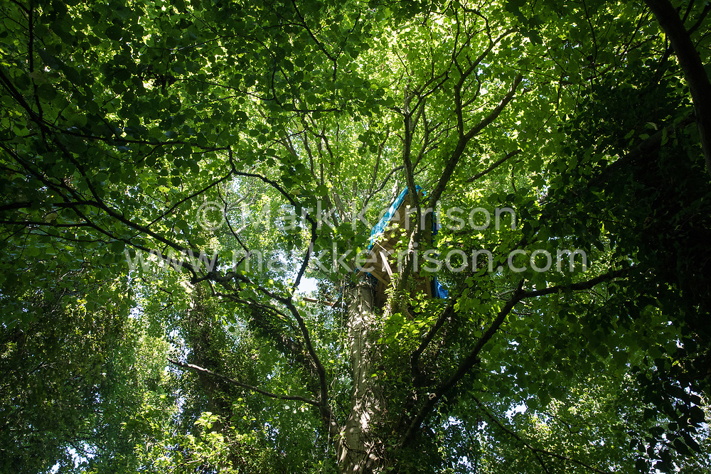Wendover, UK. 17 July, 2020. A tree house high in the trees above Wendover Active Resistance Camp. Activist groups including Stop HS2 and HS2 Rebellion continue to oppose HS2, which is currently projected to cost £106bn and which will remain a net contributor to CO2 emissions during its projected 120-year lifespan, on environmental and economic grounds.