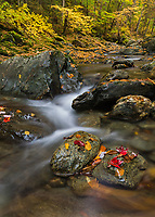 Clark Brook autumn foliage, Green Mtn National Foreset near Granville, Vermont