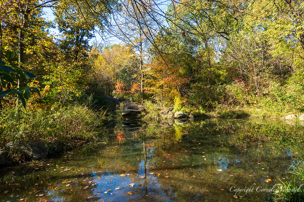 Autumn colors at The Ravine in the North Woods of Central Park.