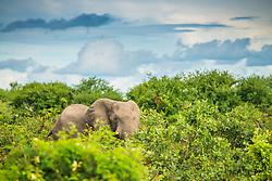 , Botswana - 3/7/2017 - (Photo by Shannon Wild/VWPics) *** Please Use Credit from Credit Field *** *** Please Use Credit from Credit Field ***
