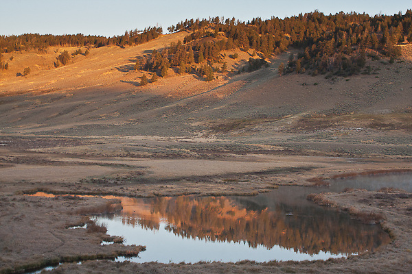 Reflections in Blacktail Pond between Mammoth Hot Springs and Tower-Roosevelt.   Yellowstone National Park, Wyoming, USA.