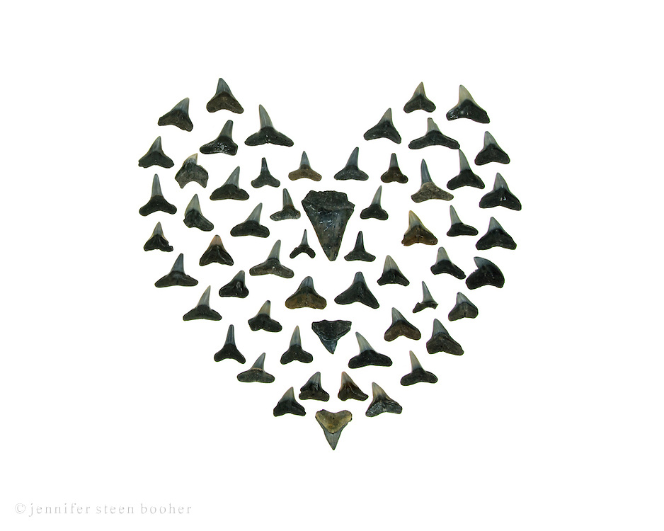 A gothic version of a sailor's valentine, using sharks' teeth instead of shells.