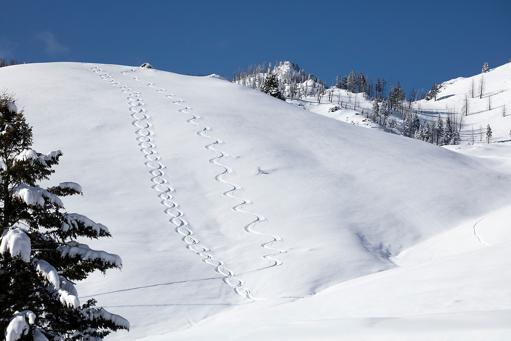 Backcountry ski tracks on Idaho hillside north of Sun Valley.  Licensing and Open Edition Prints.