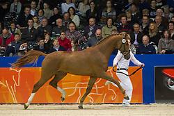 608 - Excellent<br /> KWPN Hengstenkeuring - 's Hertogenbosch 2012<br /> © Dirk Caremans
