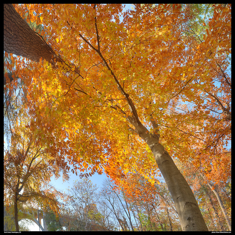 Vertical panoramic photography, square format of fall leaves in Rock Creek Park, Washington, DC with Calvert Street Bridge.Print Size (in inches): 15x15; 24x24; 36x36; 48x48; 60x60; 72x72