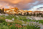 Dawn Light on Mountain with Paintbrush, Lupine and Dramatic Clouds, Mokelumne Wilderness, Eldorado National Forest, California