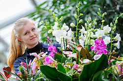 © Licensed to London News Pictures. 02/02/2017. London, UK. A Kew staff member puts the finishing touches to the displays in Kew Garden's annual Orchid Festival, which this year celebrates India's vibrant and colourful culture.  The festival runs from 4 February to 5 March 2017. Photo credit : Stephen Chung/LNP