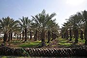 Israel, Beit Shean Valley