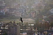 A bird of prey soars over the houses and haze of Kathmandu, Nepal.
