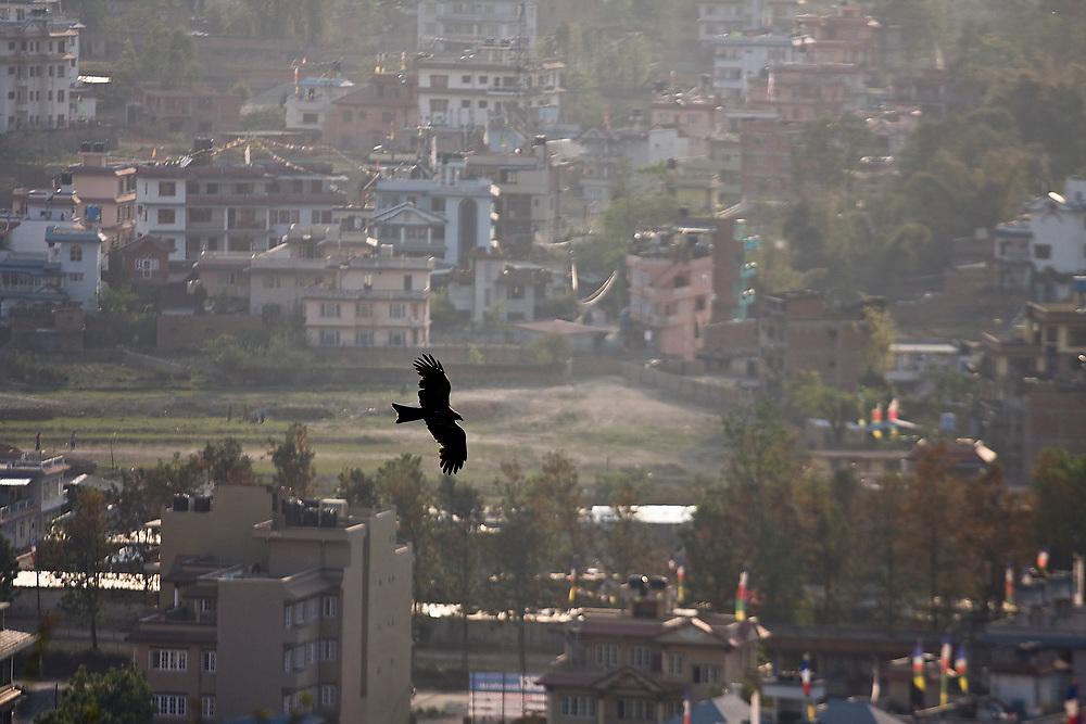 A bird of prey soars over the houses and haze of Kathmandu, Nepal.