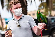 A man is seen with his friendly parrot during the final days of the worlds toughest and longest COVID-19 restrictions in St Kilda.  With 21 days of zero new cases, Premier Daniel Andrews is expected to announce major easing of restrictions, including masks, at his press conference on Sunday. (Photo by Dave Hewison/Speed Media)