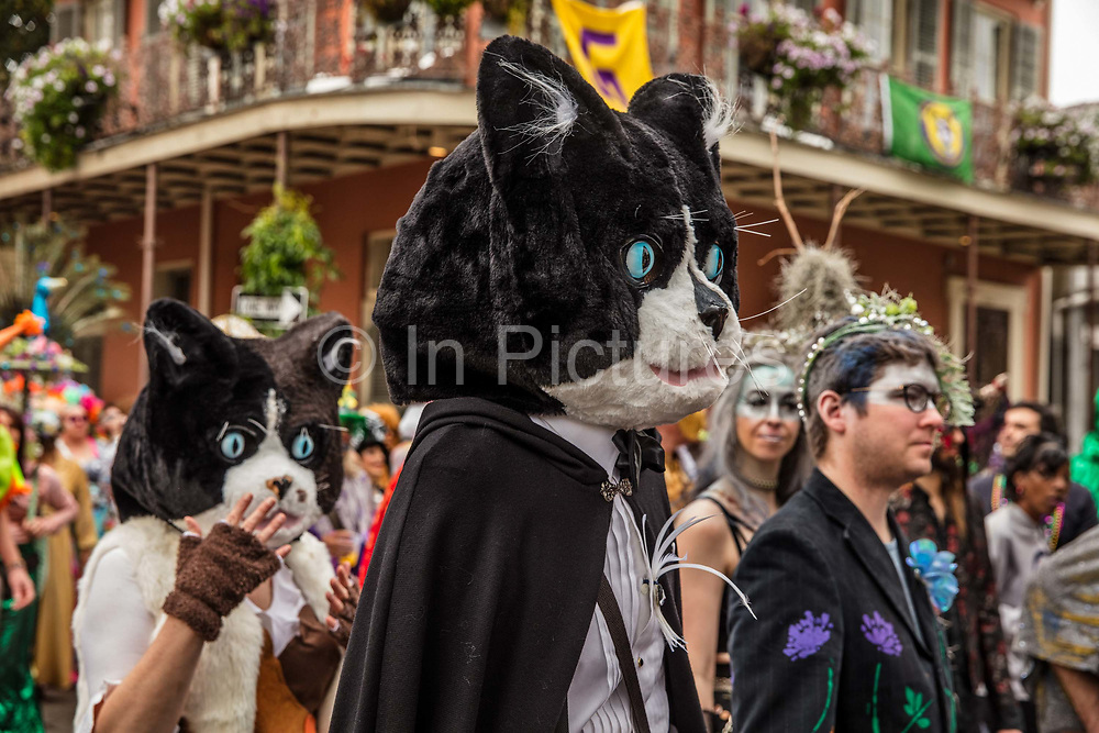 Cats costumed in the Society of Saint Anne parade during Mardi Gras on 25th February 2020 in the French Quarter of New Orleans, Louisiana, United States. Mardi Gras is the biggest celebration the city of New Orleans hosts every year. The magnificent, costumed, beaded and feathered party is laced with tradition and  having a good time. Celebrations are concentrated for about two weeks before and culminate on Fat Tuesday the day before Ash Wednesday and Lent.