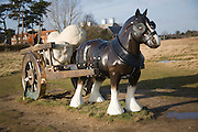 'Perceval' Sarah Lucas artwork Snape Maltings, Suffolk, England