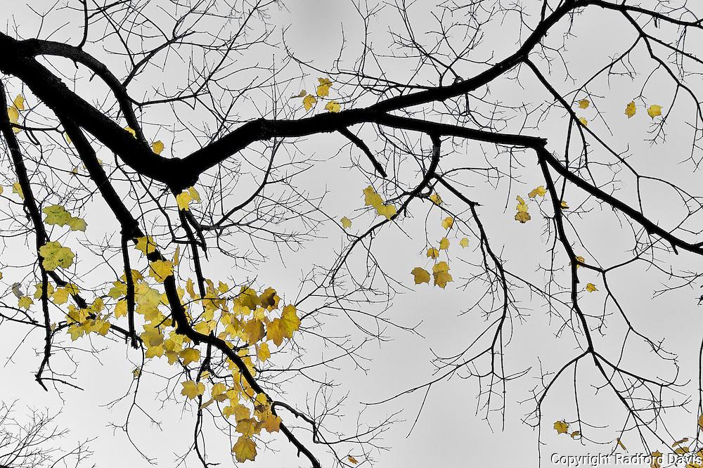 Leaves of autumn, Ames, Iowa
